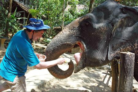elefanten_fuettern_kinder
