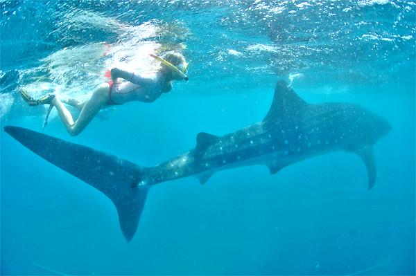 Unterwassermodel Elischeba mit Walhai