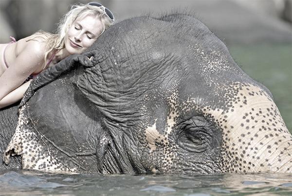 schlafen auf Elefant Elischeba