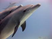 gesicht_delphine