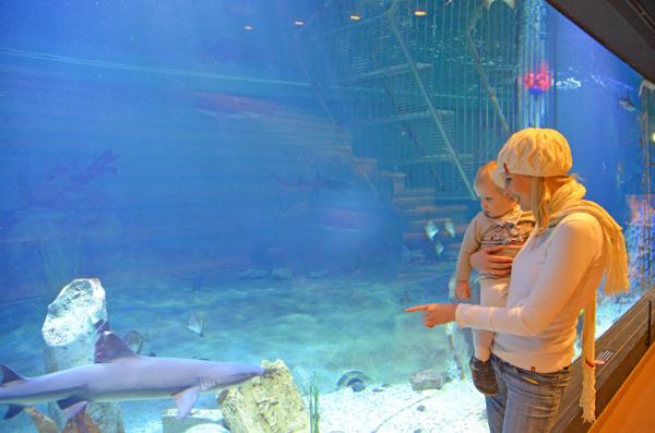 aquarium2013