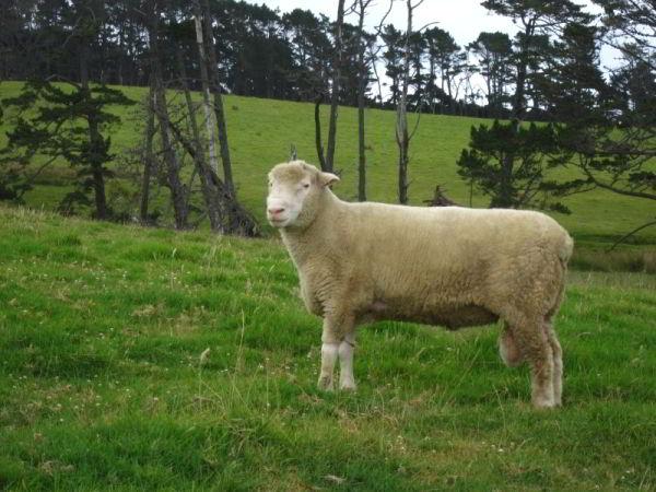 Neuseeland-erleben_info_11