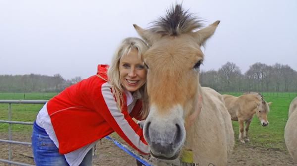 Pferd Drenthe