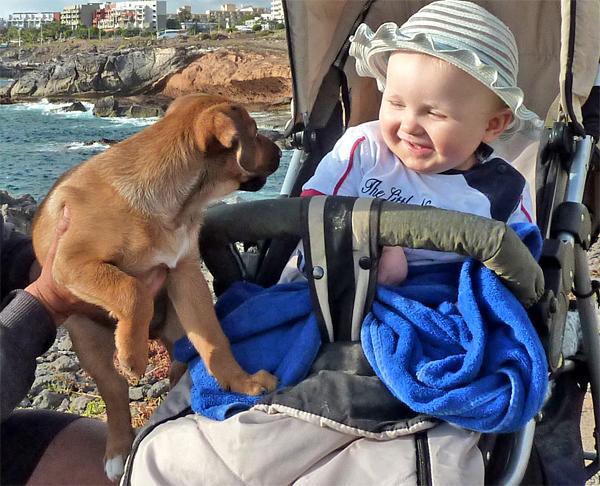 babydogs