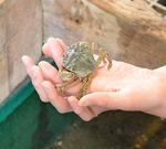 Ausflugstipp: Jütland Aquarium im Norden Dänemarks