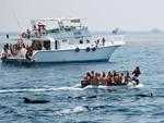 GRD warnt: Delphinjagd sollte verboten werden