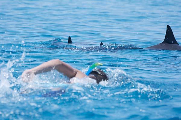 Schwimmer_krault_auf_drei_ruhende_Spinnerdelfine_zu_big-by-S-Oehen-HEPCA