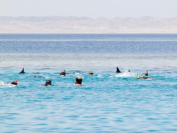 Touristen_schwimmen_auf_ruhende_Delfine_zu_big-by M.FumagalliHEPCA