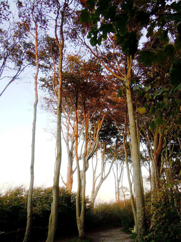 gespensterwald-ostseebad-nienhagen