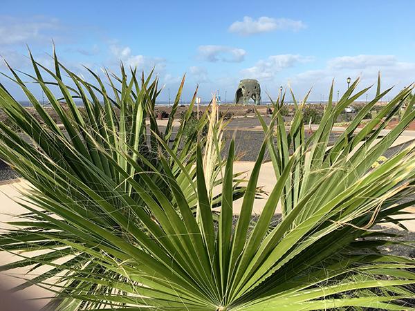 Kaktuspalme