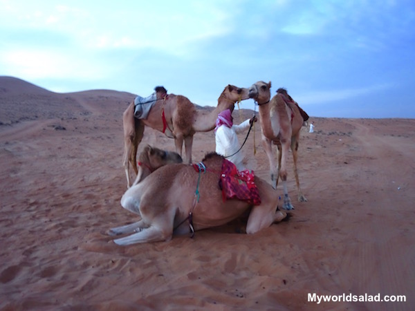 Oman, Beduinen und Dromedare