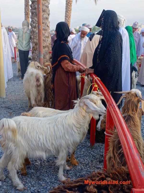 Oman, auch Frauen sind geschickte Viehhändlerinnen, MWS-1