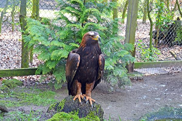 Wildpark Frankenhof Tiere