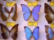 Schmetterlinge im Schaukasten