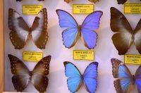 Schmetterlingsfarm Steinhude ? Ausflugstipp bei Regenwetter