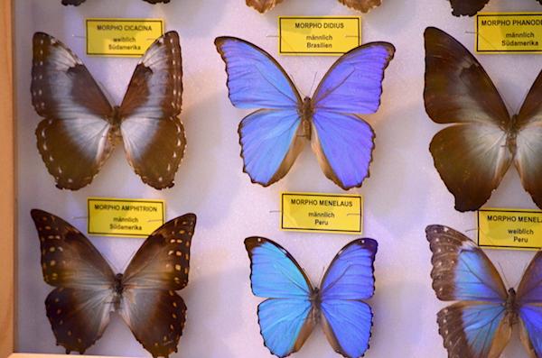 getrocknete Schmetterlinge
