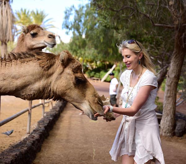 Kamele füttern