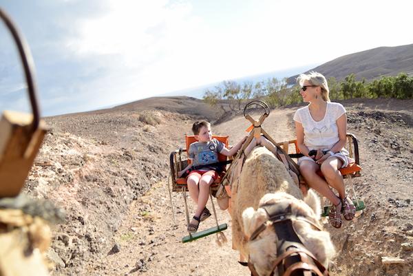 Kamelreiten auf Fuerteventura