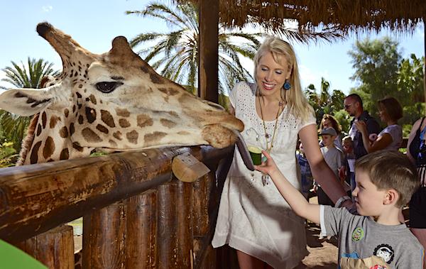 Oasis Park Giraffe Elischeba Leon