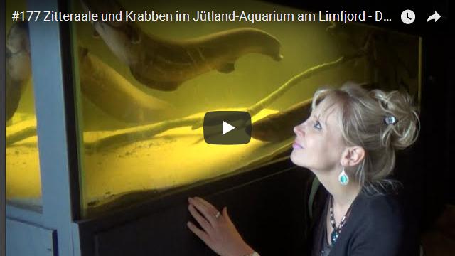 ElischebaTV_177_640x360 Jütland Aquarium am Limfjord in Dänemark