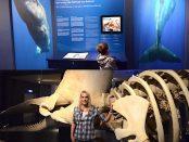 Wale in Wilhelmshaven UNESCO Welterbe