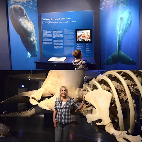 Wale in Wilhelmshaven